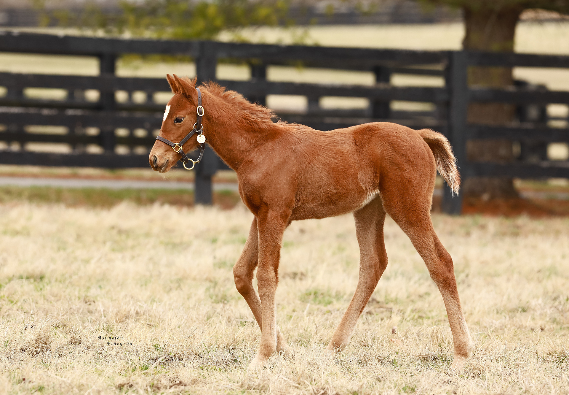 Justify-x-Beatrix-Potter-filly.jpg#asset:21978