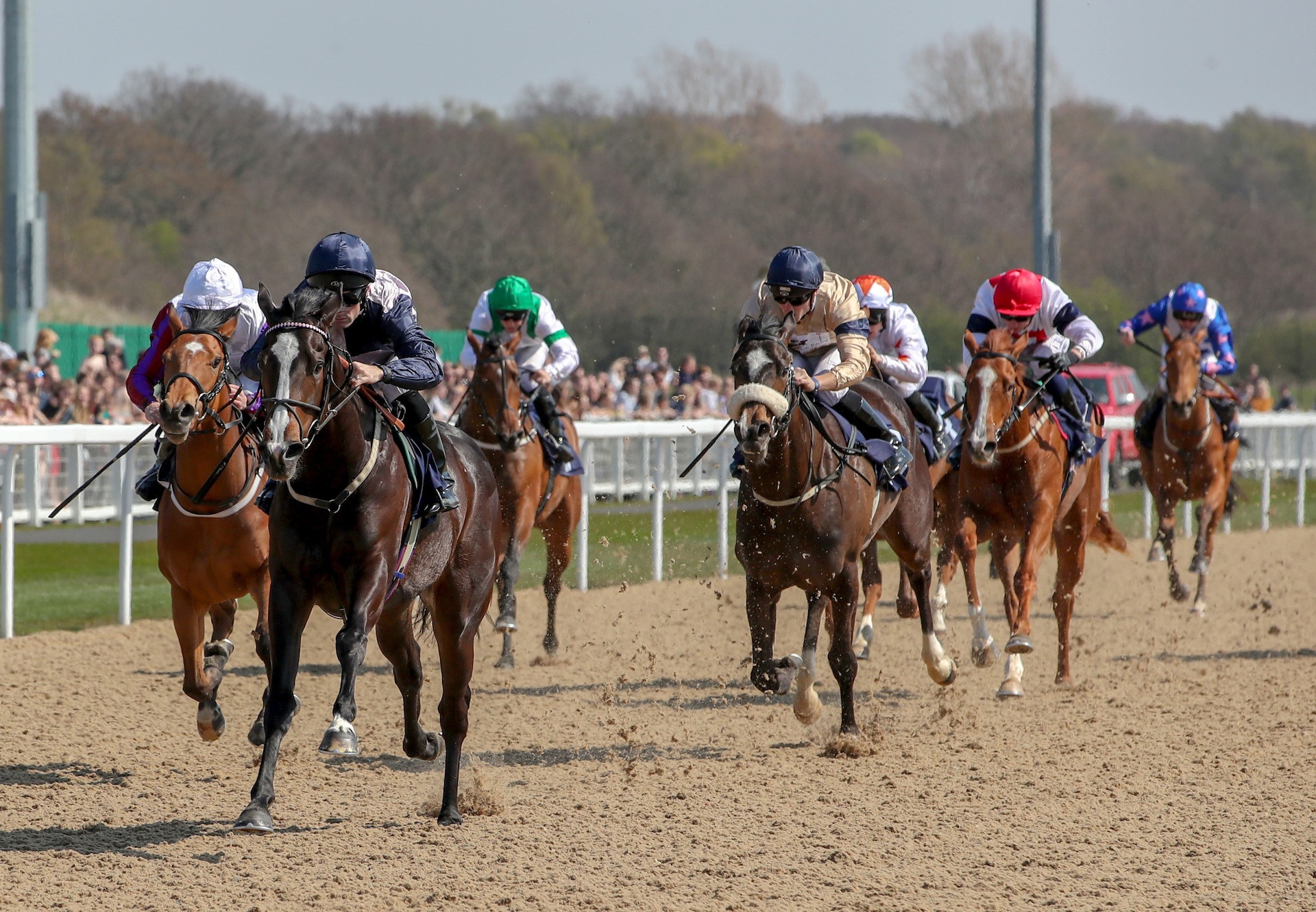 Queen Mary Aim For Unbeaten Starspangledbanner Filly-7521