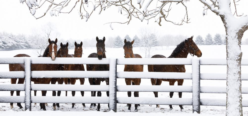 Ashford Snow 2