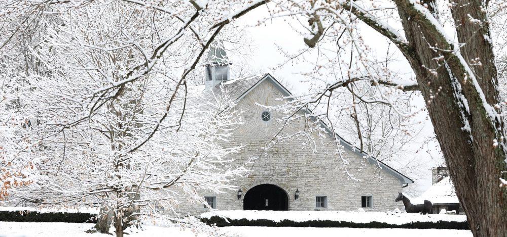 Ashford Snow 5
