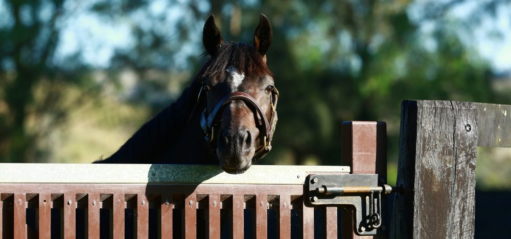 Coolmore Australia Home Page Adelaide