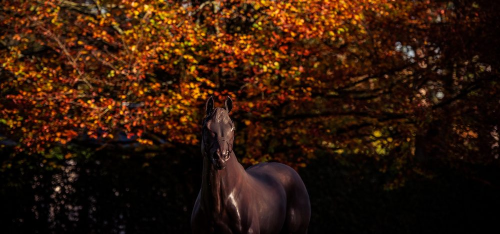 Coolmore Autumn 2018 141