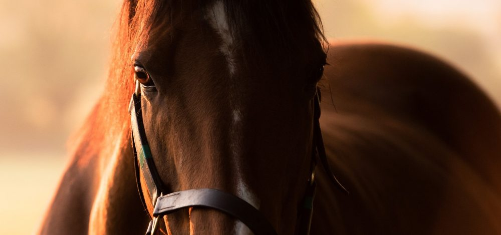 Head Of State (American Pharoah) winning the Gr.3 Gloaming Stakes at Rosehill