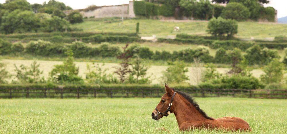Pour Joie (Pour Moi) winning a bumper at Warwick
