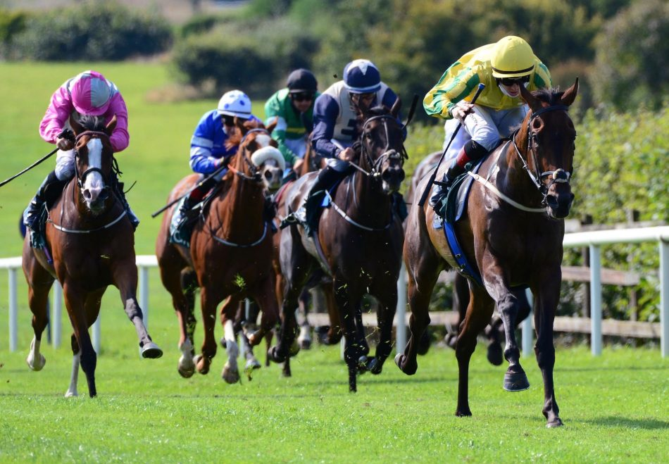Skilled Warrior (Holy Roman Emperor) Gets Off The Mark At Roscommon