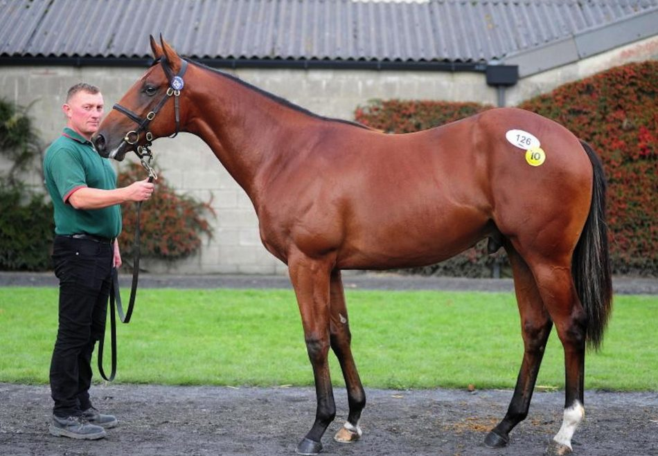 Churchill X Astrid yearling filly conformation shot
