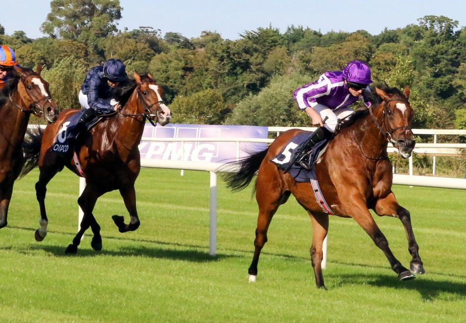 Donny Boy (Westerner) Wins The 4YO Maiden At Dromahane