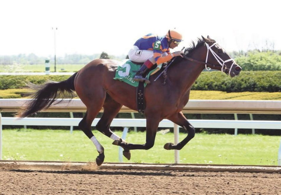 Diademe in foal to Vancouver
