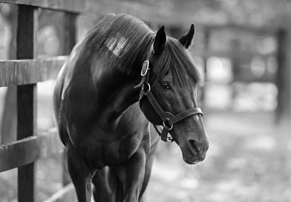 Jack Christopher (Munnings) Gr.1 Champagne Stakes at Belmont Park