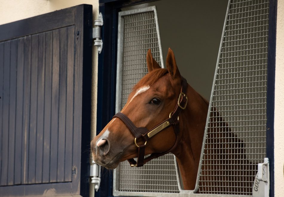 Little Light (Walk In The Park) selling for £200,000 at Aintree
