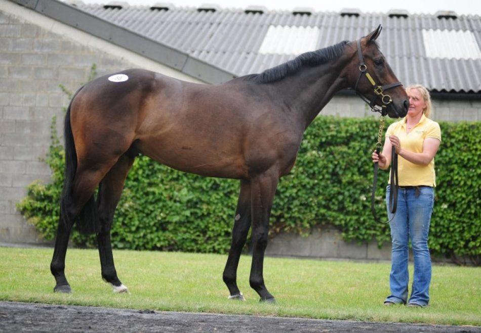 Newcomer Albigna Becomes The Latest Winner By Zoffany