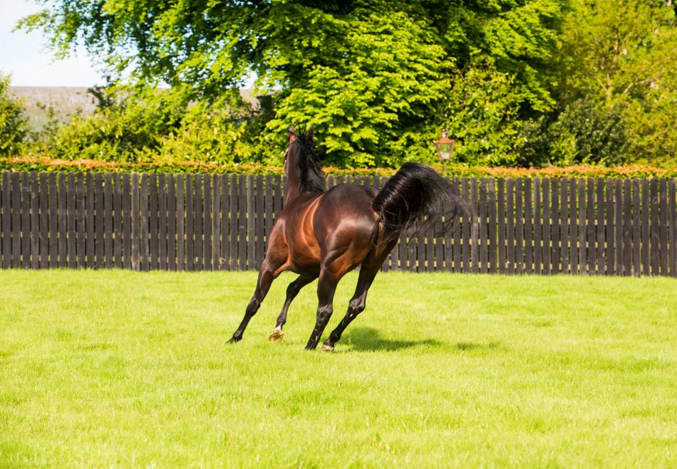 Fantail (Zoffany) Wins Fillies Novice Stakes at Chelmsford