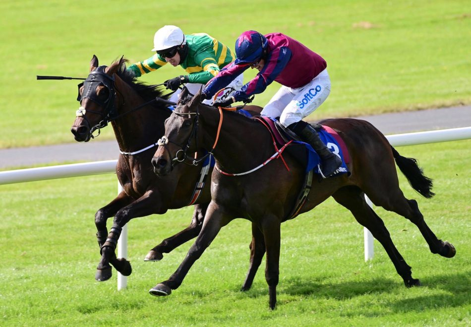 Getabird (Getaway) winning the G2 Moscow Flyer Novice Hurdle at Punchestown