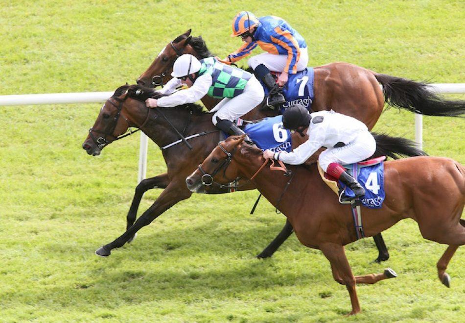Cats For Cash (Mahler) winning a maiden hurdle at Downpatrick