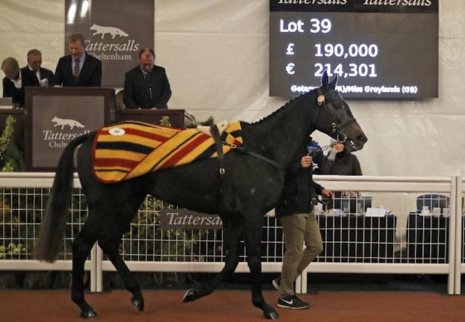 Camelot ex Flawless Beauty selling for €500,000 at Goffs Orby Sale