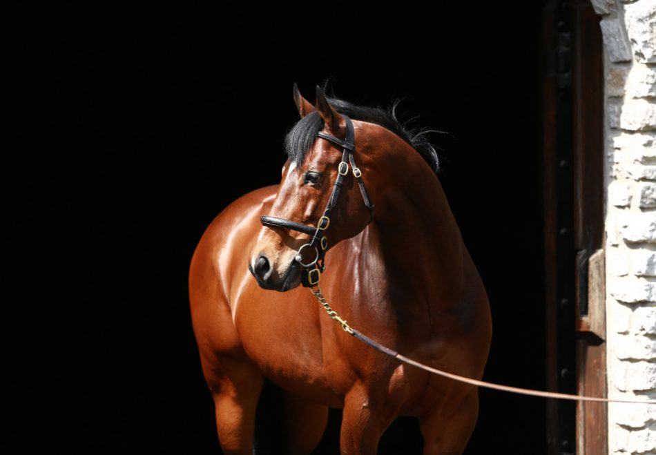 Speed Franco (Declaration Of War) winning the Pulpit Stakes at Gulfstream
