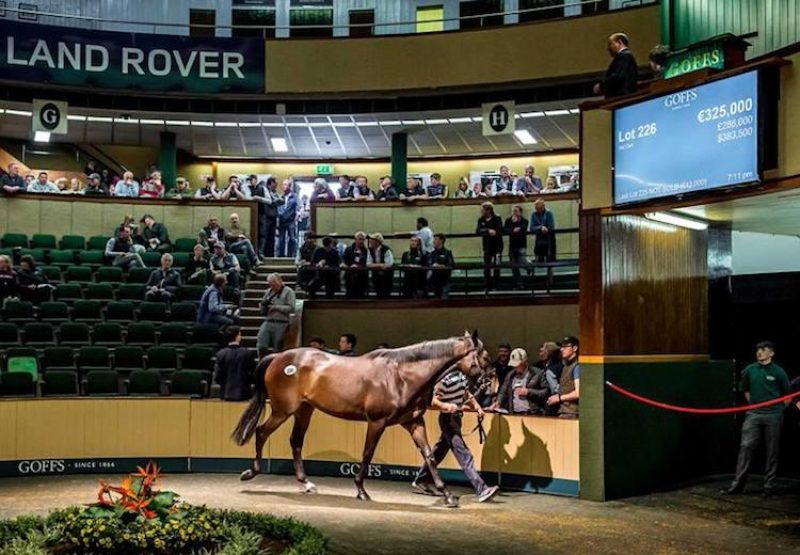 Flemensfirth ex Keep Face gelding selling for €325,000 at Goffs Land Rover Sale