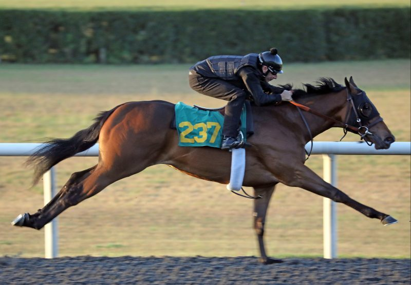 American Pharoah X Megalicious Obs March