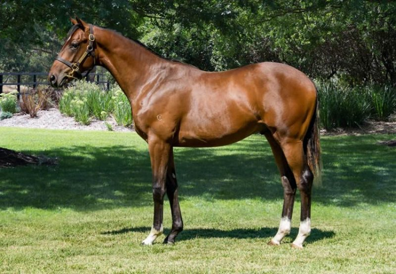 Churchill X Belle Famille yearling colt conformation shot