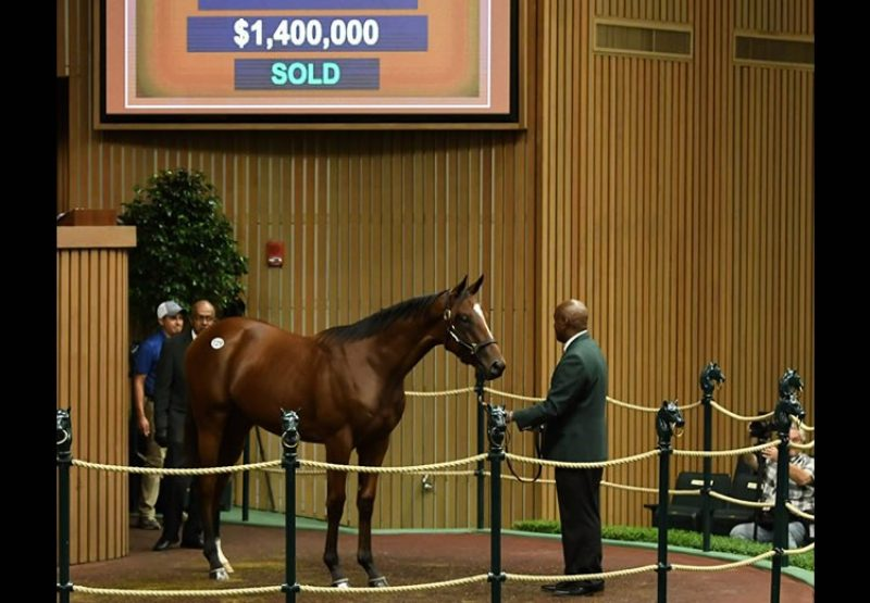 American Pharoah ex Bsharpsonata yearling colt selling for $1.4 million