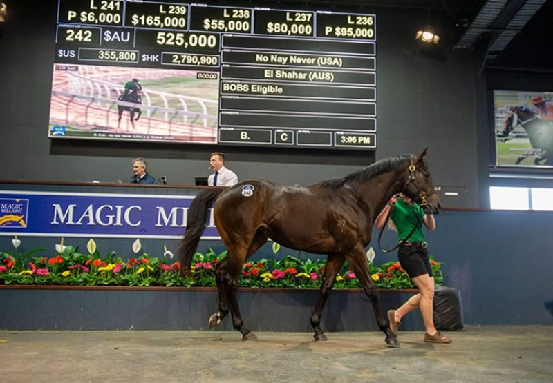 No Nay Never ex El Shahar 2YO colt tops the Magic Millions 2YOs in training sale selling for $525,000