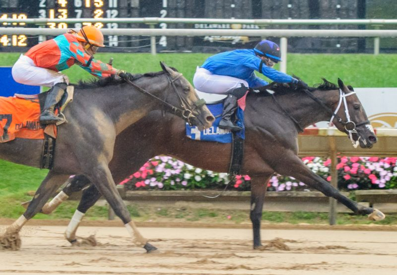 Cooke Creek (Uncle Mo) wins the Rocky Run Stakes at Delaware