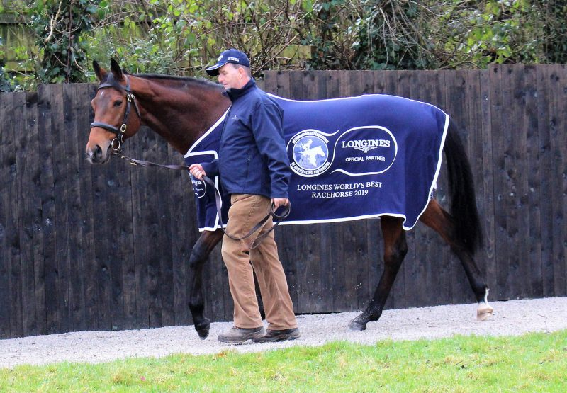 Crystal Ocean Walking With Longines Rug