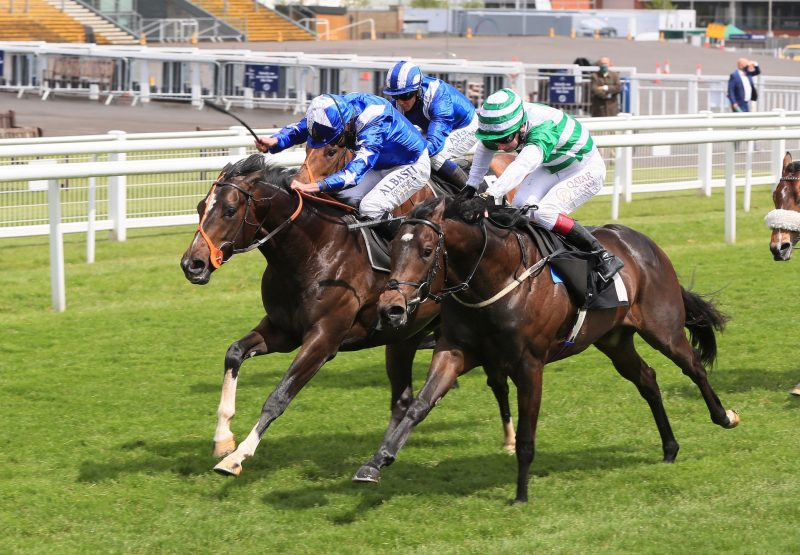 Dukebox (Holy Roman Emperor) Wins The Class 2 Conditions Stakes At Newbury