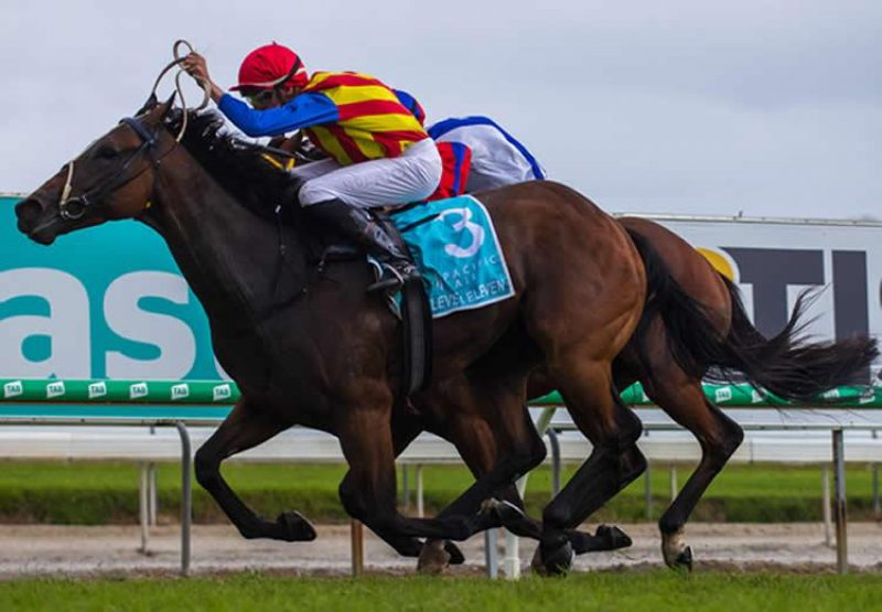 Eleven Eleven (Fastnet Rock) wins the Pacific Fair MM Cup at the Gold Coast