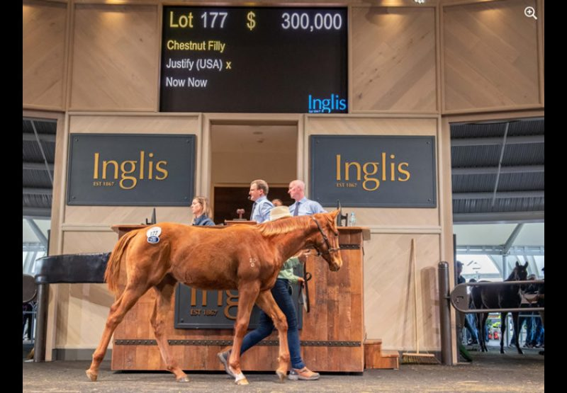 Justify X Now Now weanling filly
