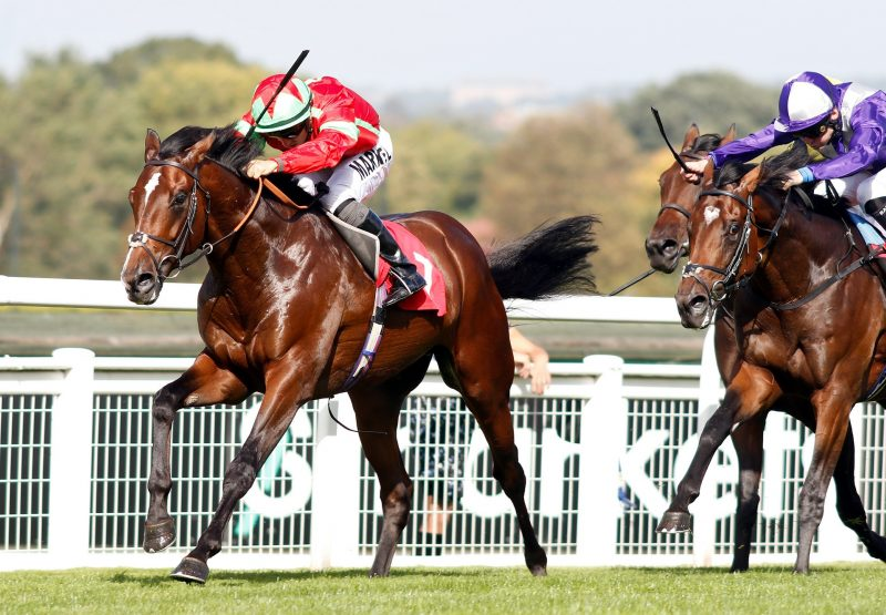 Flying Dragon (War Command) winning a novice stakes at Sandown