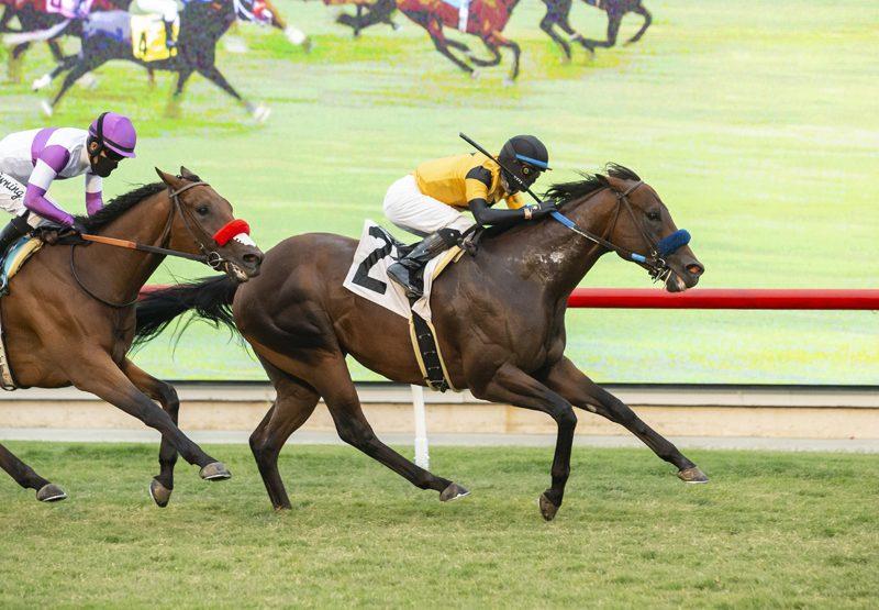Galilean (Uncle Mo) Wins California Dreamin Stakes At Del Mar