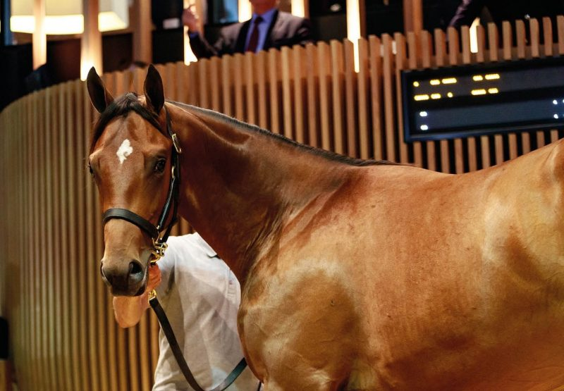 Galileo Ex Steip Amach Tops Day 1 Of Arqana Yearling Sale 2019