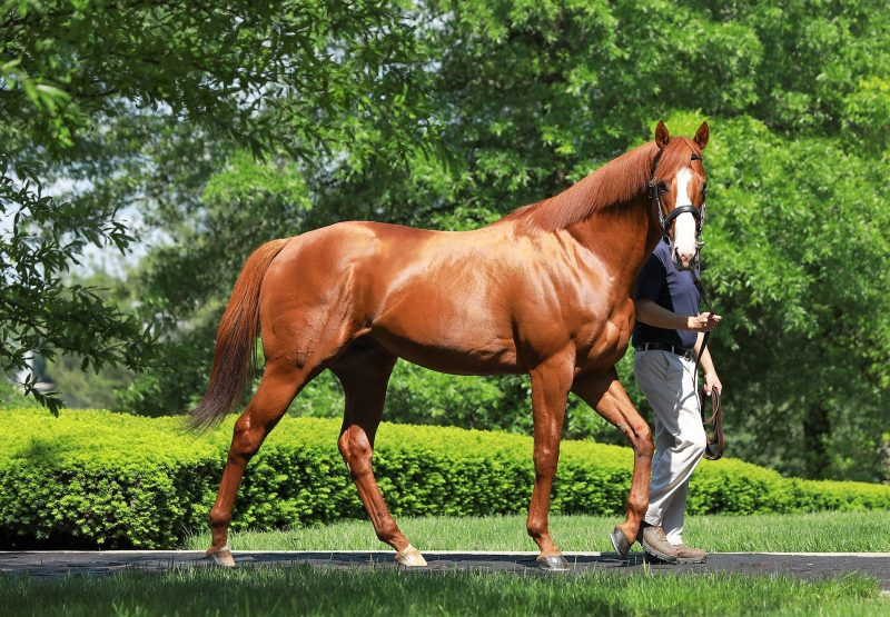 Justify At Stables
