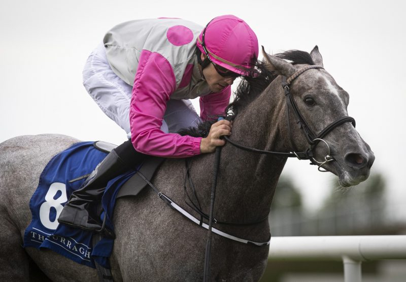 Parkers Hill (No Nay Never) winning a maiden at Leopardstown
