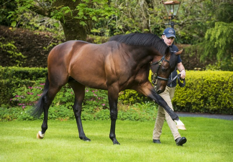No Nay Never ex Jacquelin Jag selling for 450,000gns