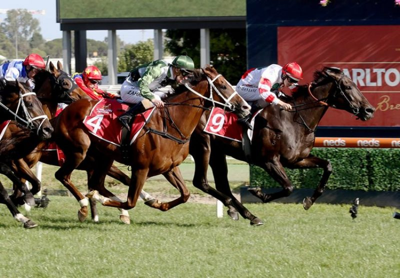 Miss Siska (So You Think) winning the Gr.2 Peter Young stakes at Caulfield