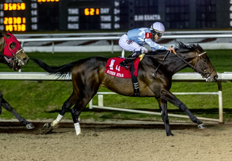 Modernist Uncle Mo Gr 2 Risen Star