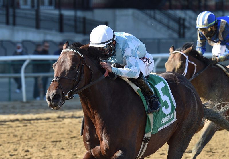 Modernist (Uncle Mo) Gr.3 Excelsior Stakes at Aqueduct