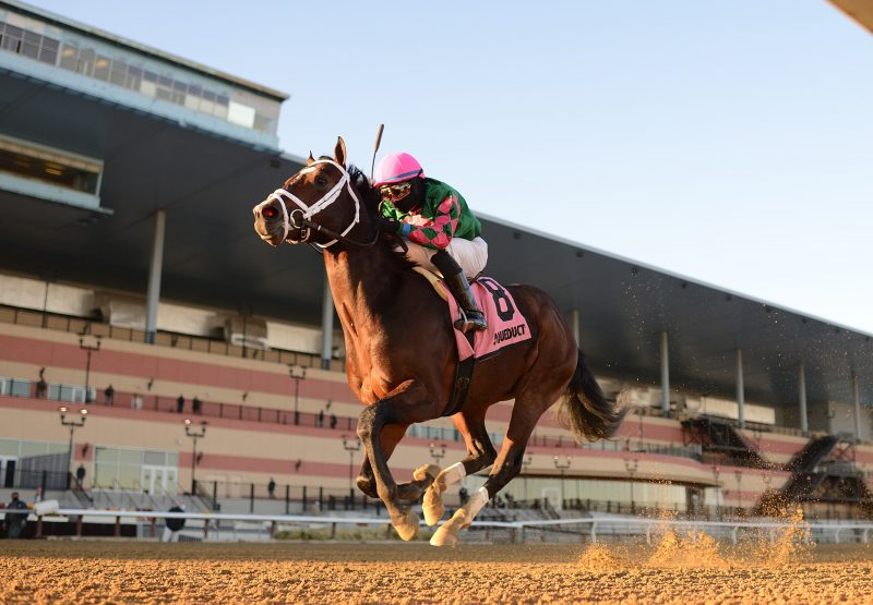 Perfect Munnings (Munnings) wins the Rego Park Stakes at Aqueduct
