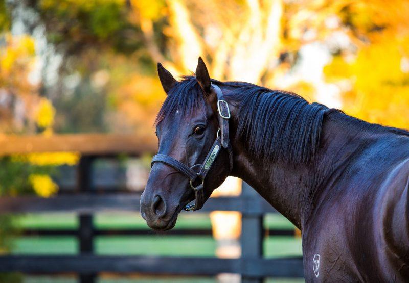 Fastnet Rock ex Risk Aversion colt selling for $1 million at the Magic Millions