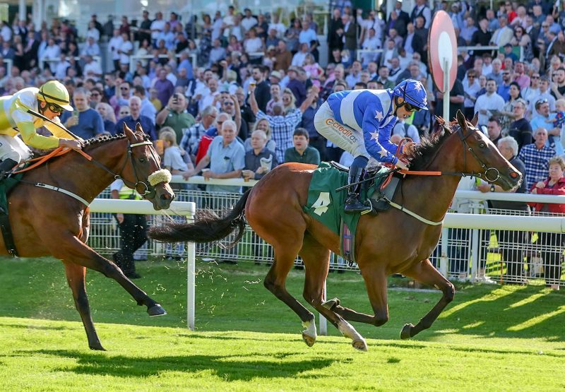 Rose Bandit Becomes The Latest Winner By Requinto