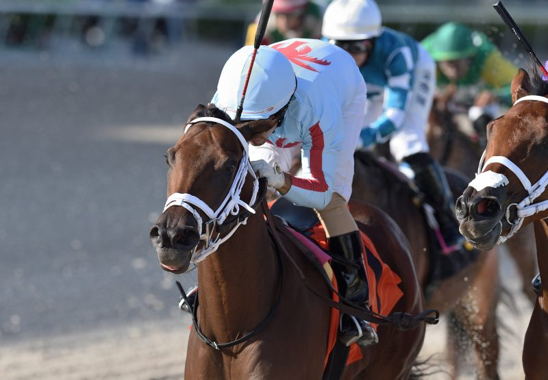 She's So Beautiful (Air Force Blue) winning the Khozan Juvenile Fillies Sprint Stakes at Gulfstream Park