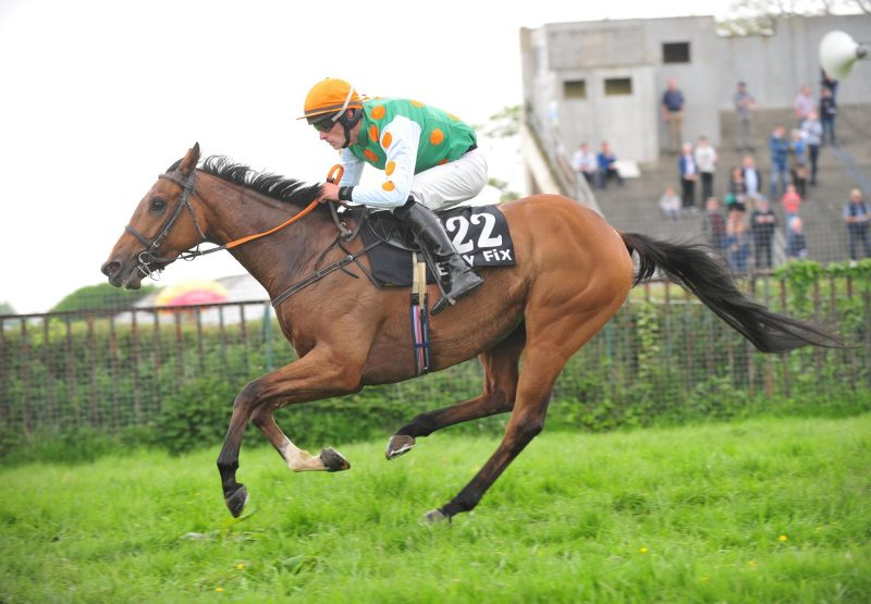 Silent Assistant (Sans Frontieres) winning a Point-to-point at Tralee