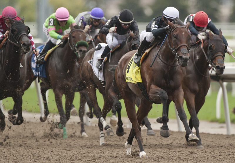 Skygaze (American Pharoah) Winning the Belle Mahone Stakes At Woodbine