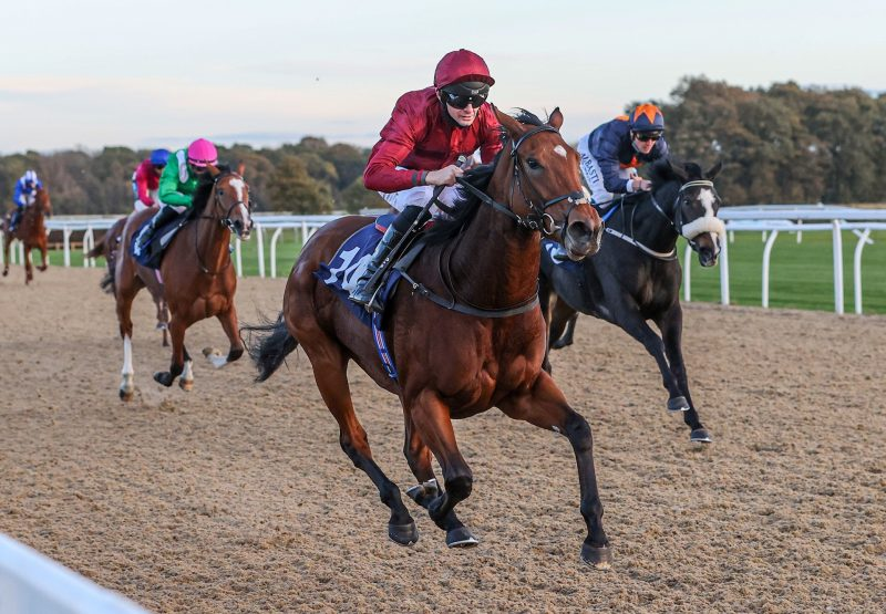 Wild Iris (No Nay Never) Wins On Debut at Newcastle