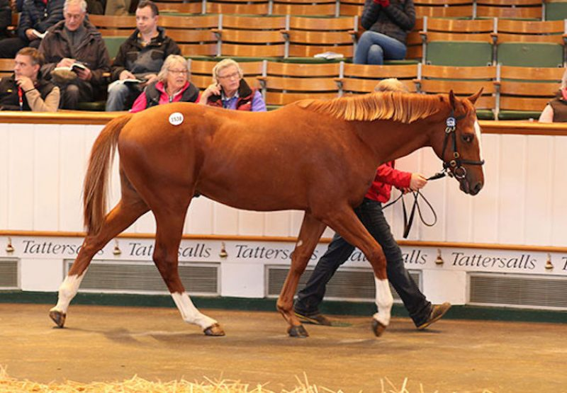 Champs Elysees ex Elpida selling for 90,000gns at Tattersalls