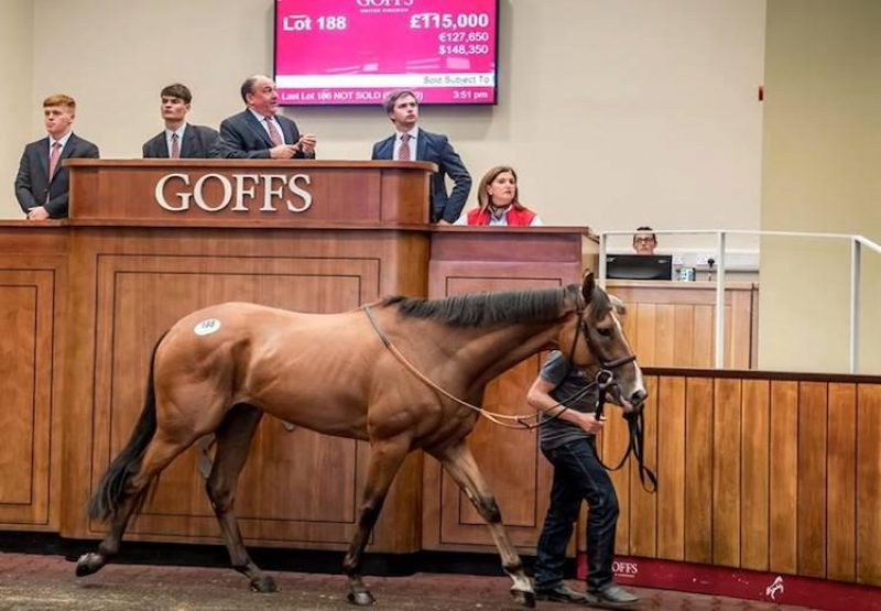 Hasanoanda (Champs Elysees) selling for £115,000 at the Goffs UK August Sale in Doncaster