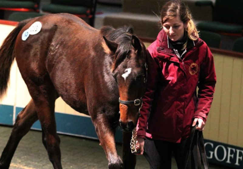 Holy Roman Emperor ex Laqataat colt selling for €120,000 at Goffs