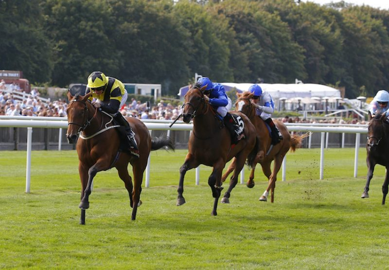 Main Edition (Zoffany) winning the G3 Sweet Solera Stakes at Newmarket